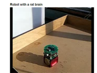 Rat_brain_robot_2