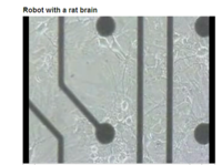 Rat_brain_robot_3